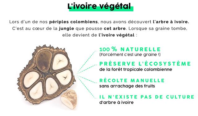 Présentation de l'ivoire végétale selon Mazonia