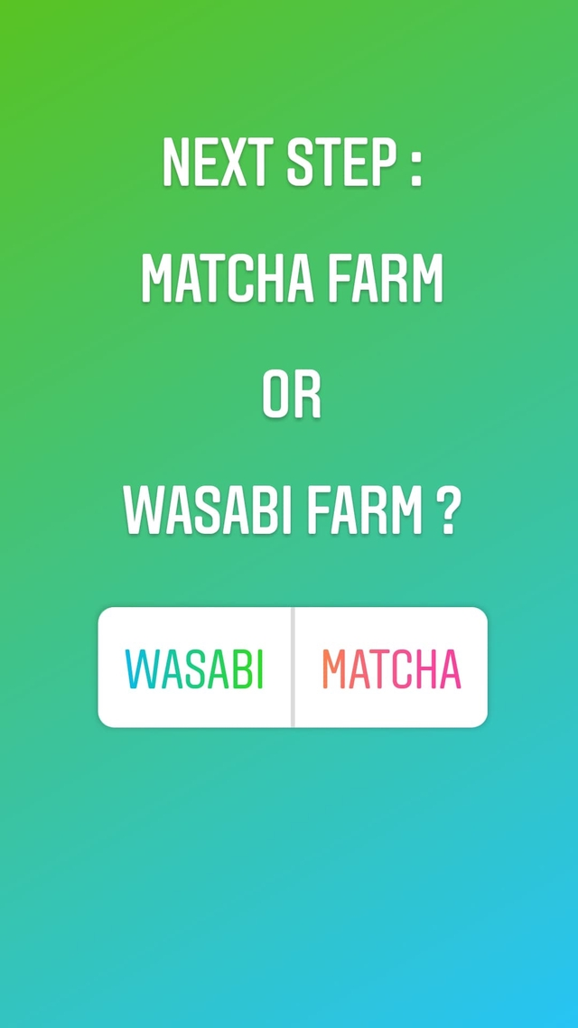 NEXT STEP MATCHA FARM OR WASABI FARM ? WASABI MATCHA