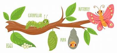 BUTTERFLY CATERPILLAL PUPA EGGS