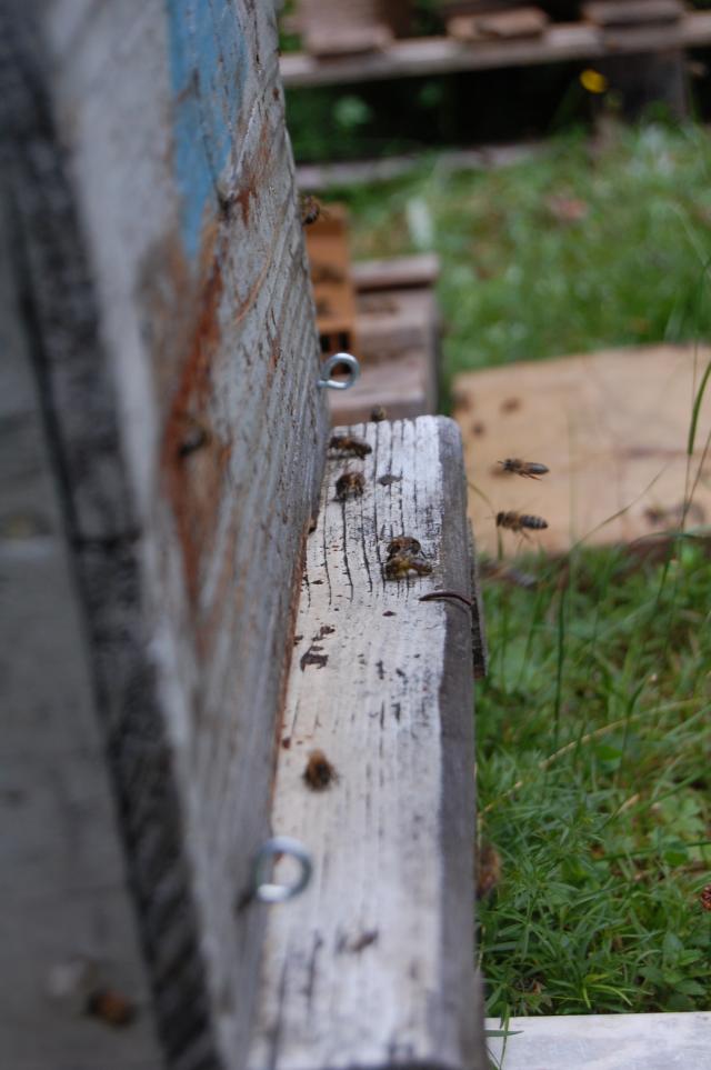 apiculteur frejus