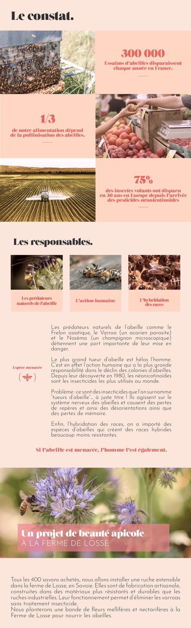 """Le constat. 300 000 Essaims d'abeilles disparaissent chaque annee France. 13 de notre alimentation depend de la pollinisation des abeilles. 75% des insectes volants ont dispart 30 ans Europe depuis T'arrivee des pesticides nconicotinoiides Les responsables. Les predateurs L'action humaine ybridation naturels de Pabeille des Les predateurs naturels de l'abeille comme le Frelon asiatique, e Varroa (un acarien parasite) et le Nosema (un champignon microscopique) detiennent une part importante de leur mise en danger Le plus grand tueur d'abeille est helas I'homme Espece menacee C'est en effet l'action humaine qui a la plus grande responsabilite dans e declin des colonies d abeilles Depuis leur decouverte en 1980 les neonicotinoides sont les insecticides les plus utilises au monde. Probleme ce sont des insecticides que onsurnomme """"tueurs d'abeille"""". a juste titre Ils agissent sur le systeme nerveux des abeilles et causent des pertes de reperes et ainsi des desorientations ainsi que des pertes de memoire. Enfin, I'hybridation des races, on a importe des especes 'abeilles qui creent des races hybrides beaucoup moins resistantes. Si I'abeille est menacee, I'homme I'est egalement. Un projet de beaute apicole LA FERME DE LOSSE Tous les 400 savons achetes, nous allons installer une ruche extensible dans la ferme de Losse, en Savoie Elles sont de fabrication artisanale, construites dans des materiaux plus resistants et durables que les ruches industrielles Leur fonctionnement permet d'eliminer les varroas sans traitement insecticide Nous planterons une bande de fleurs melliferes et nectariferes a la Ferme de Losse pour nourrir les abeilles."""