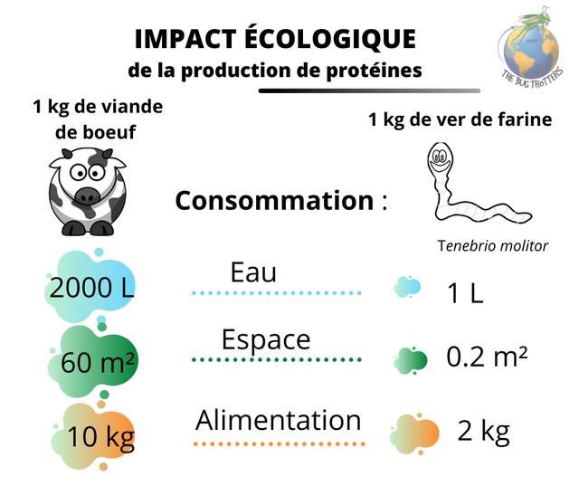 IMPACT ECOLOGIQUE de la production de proteines 1 kg de viande 1 kg de ver de farine de boeuf e Consommation Tenebrio molitor Eau 2000 L 1 L Espace 60 m2 0.2 Alimentation 10 kg 2 kg