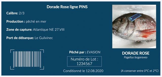 Dorade Rose ligne PINS 2/3 on : peche en mer capture: Atlantique NE 27.VIII debarque: Le Guilvinec Peche par : EVASION DORADE ROSE Pagellus bogaraveo Numero de Lot: 1234567 Conditionne le 12.08.2020 (A conserver entre 0oC et 2C