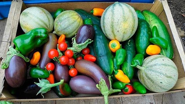 légumes de notre jardin